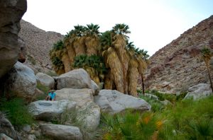 Palm Canyon Loop Trail in Anza-Borrego Park—Caroline Helbig