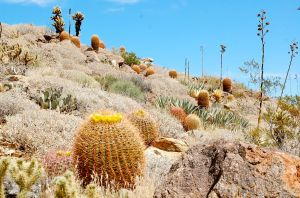 Plum Canyon Trail in Anza Borrego State Park—Caroline Helbig