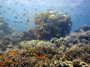 Dahab Coral Gardens. Photo credit: Matt Kieffer