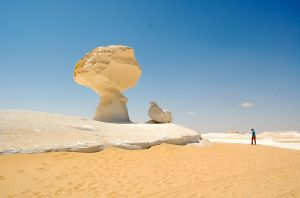 White Desert Mushroom