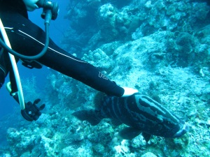 Friendly grouper at Little Cayman Bloody Bay Marine Park—Caroline Helbig