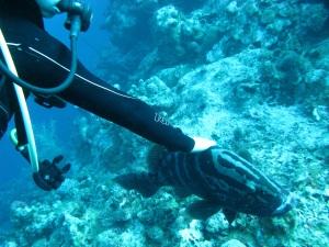 Friendly grouper at Little Cayman Bloody Bay Marine Park—Caroline Helbig