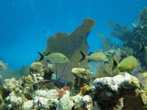 Little Cayman's Bloody Bay Marine Park—Caroline Helbig