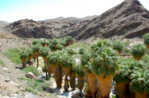 Palm Canyon Trail, Indian Canyons Palm Springs—C. Helbig