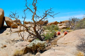 Pine City Trail, Joshua Tree National Park—C.Helbig