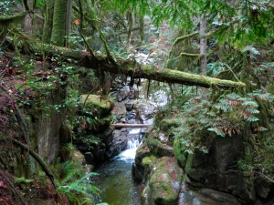Cypress Falls Park, West Vancouver—C.Helbig