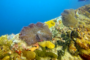 Beautiful coral growing on the wrecks in Coron Bay.
