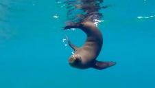 Water acrobatics at Los Islotes—Runen Sandoval, David Oguey