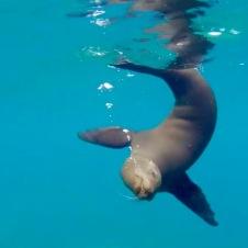 Underwater ballet at Los Islotes—Ruben Sandoval, David Oguey