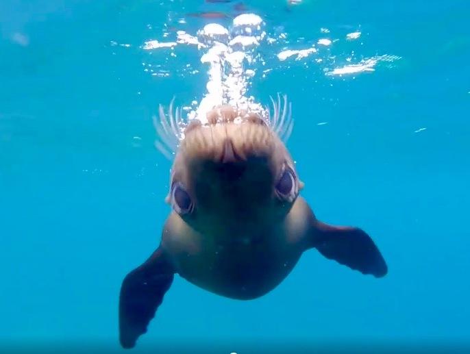Los Islotes Sea Lions, Mexico