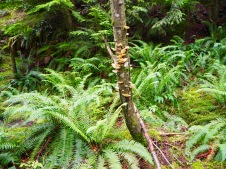 Giant ferns and pretty fungi