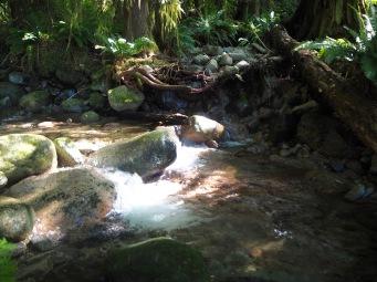 Good drinking water near Golden Stanley Hut