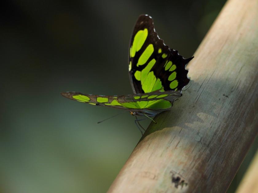 Stunning butterflies and moths at Iguazú NP Argentina